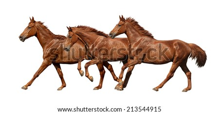 Three horses running fast isolated on white background - stock photo