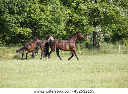 three horses running on a green pasture in the sun