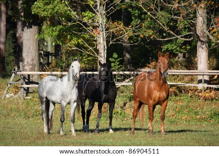 Three horses standing at the field in autumn - stock photo