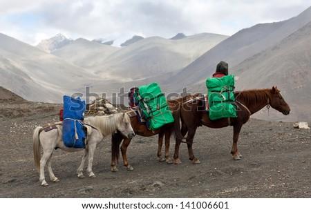 Three Horses with heavy load at the Sangda pass in Upper Dolpo region, Nepal - stock photo
