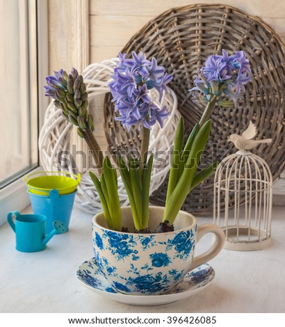 Three   hyacinth in a vintage pot next to a decorative cell in the window - stock photo