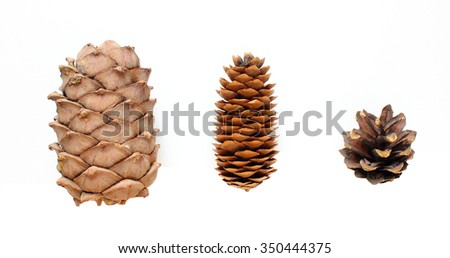 Three isolated dry cones: cedar, fir and pine. - stock photo