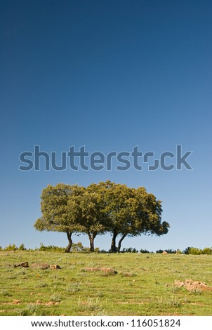 Three isolated trees and blue sky