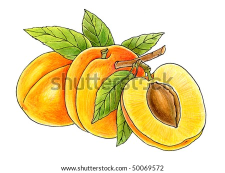 three juicy peaches isolated on white background - stock photo