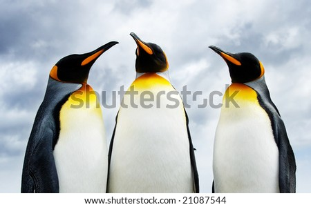 Three King Penguins at Volunteer Point - stock photo