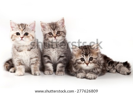 Three kitten sitting and looking at the camera (isolated on white) - stock photo