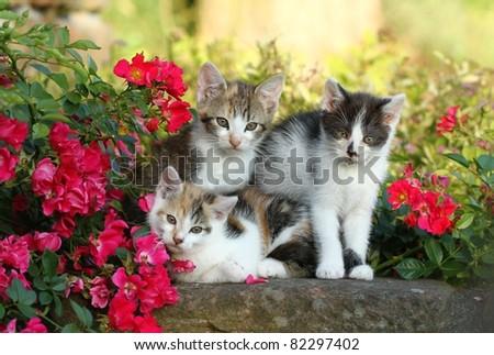 Three kittens - stock photo