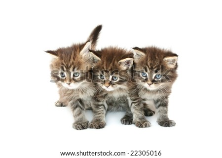 three kittens against white background