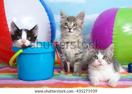 Three kittens laying on colorful striped beach towel with beach balls, shovel, pale, sun glasses blue sky background white fluffy clouds. Looking forward. Horizontal presentation with copy space above