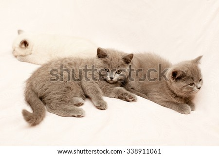 Three kittens lying on pink background  - stock photo