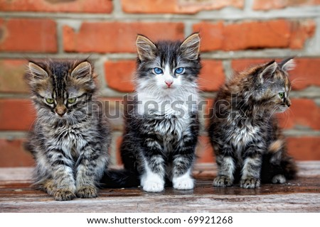 three kittens on bricks background - stock photo