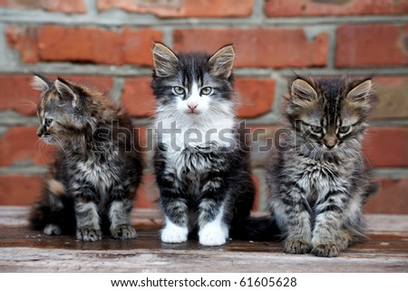 three kittens on the bricks wall background - stock photo
