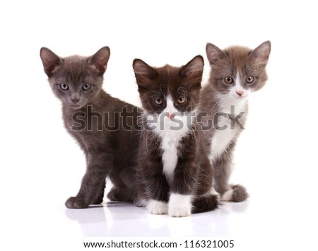 three kittens siting isolated on white - stock photo