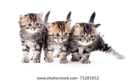 three kittens striped tabby isolated - stock photo