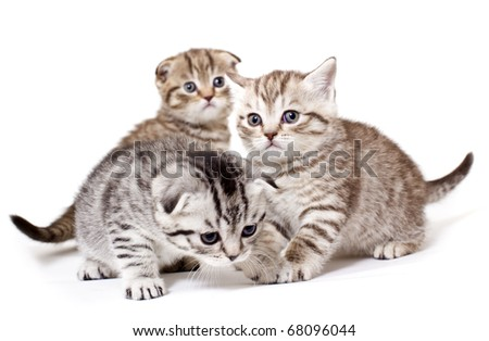 Three kitties play on white background