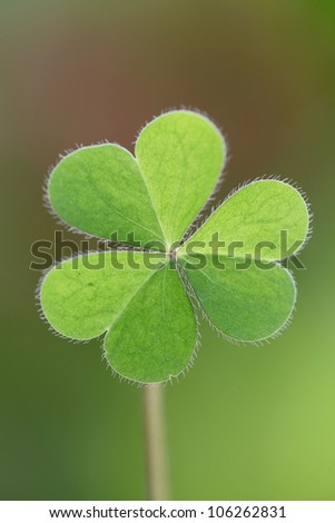 Three leaf clover against green