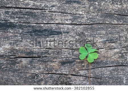 Three-leaf Clover on grunge old aged wooden background: Shamrock leaves symbolic plant metaphor of Christian Holy Trinity and popular motif in Victorian times: St Patrick day, Irish festival symbol - stock photo