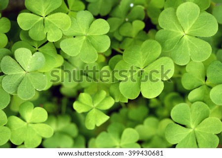 Three leaf clovers for background - stock photo