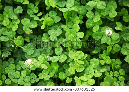 Three leaf clovers in the farmland field - stock photo