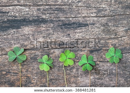 Three-leaf Clovers on grunge old aged wooden background: Shamrock leaves symbolic plant metaphor of Christian Holy Trinity and popular motif in Victorian times: St Patrick day, Irish festival symbol - stock photo