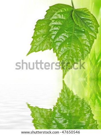 three leaves with mirroring effect