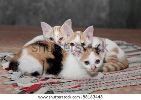 three little cat - stock photo