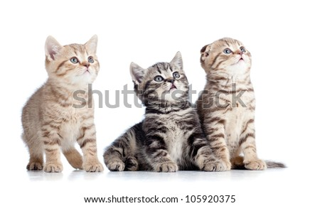 three little cats kittens looking up isolated on white background - stock photo