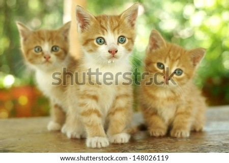 three little cute red kitten against green bokeh background. shallow dof. focus on kitten in the centre. - stock photo