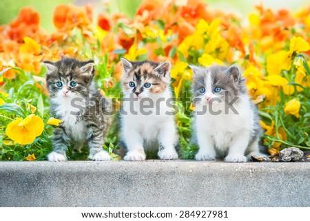 Three little kitten sitting near a flowerbed - stock photo