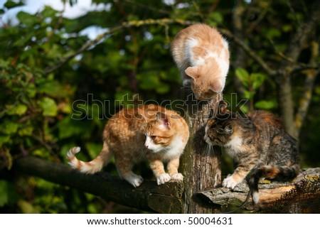 Three little kittens - stock photo