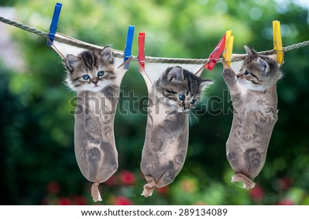 Three little kittens hanging in stockings suspended from the rope - stock photo