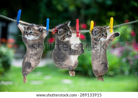 Three little kittens hanging in stockings suspended from the rope trying to escape - stock photo