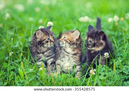 Three little kittens sitting in a grass
