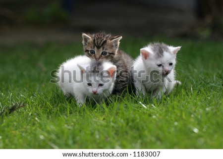 Three little kittens staying close together on the lawn - stock photo