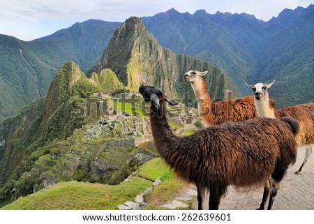 Three Llamas in front of Machu Picchu, the famous lost city of the Incas near the river Urubamba located in the region of the sacred valley of Cuzco. Machu Picchu is a UNESCO world heritage site and - stock photo