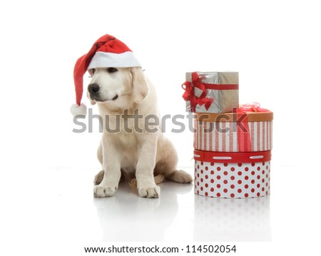 Three-month golden retriever puppy in a red Santa Claus hat near to a stack of boxes with gifts