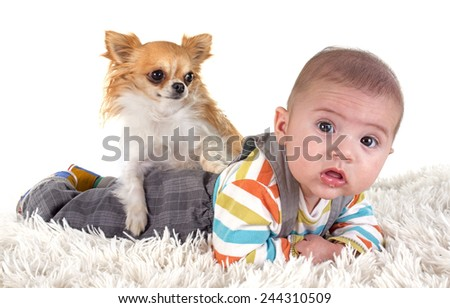 three months baby and chihuahua in front of white background - stock photo