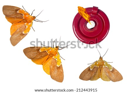 Three moths are on a suicide mission to a burning flame. - stock photo