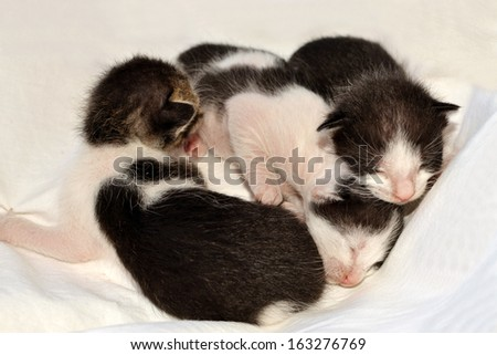 Three newly born kittens laying in bed
