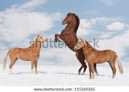 Three nice horses in the winter - stock photo