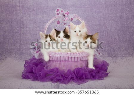 Three Norwegian Forest Cat kittens sitting inside purple tutu decorated basket on light purple background  - stock photo