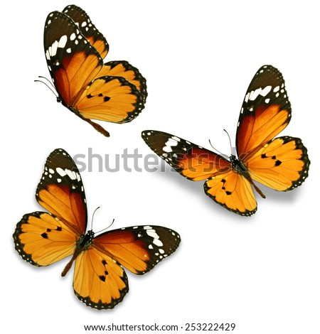 Three orange butterfly isolated on white background - stock photo