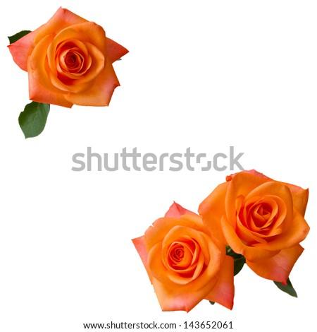 three orange roses isolated  on white background - stock photo
