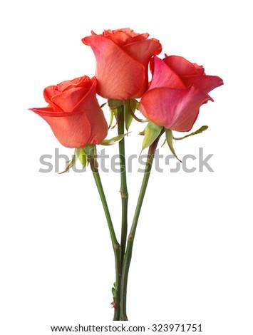 Three orange roses isolated on white background. - stock photo