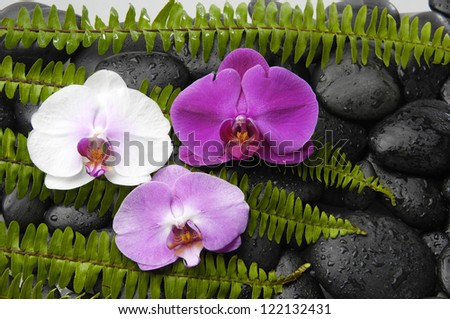 Three orchid and stones with set of green fern - stock photo