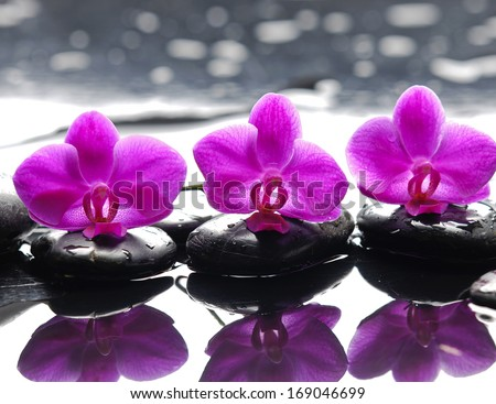 Three orchid flower and stones with reflection in water drops - stock photo