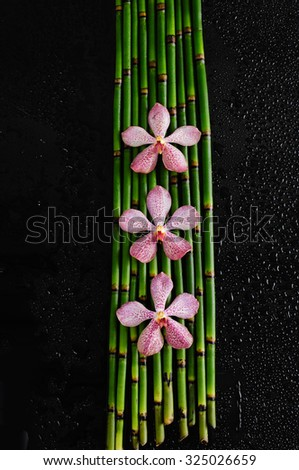 three orchid on bamboo grove on wet black background  - stock photo