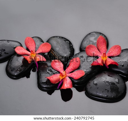 Three orchid on black stones background - stock photo
