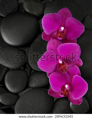 Three orchids lying on black stones. Viewed from above. Spa concept. LaStone Therapy  - stock photo