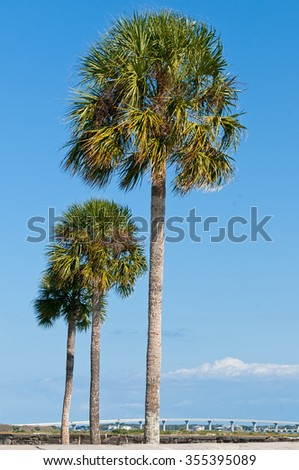 Three palm trees - stock photo